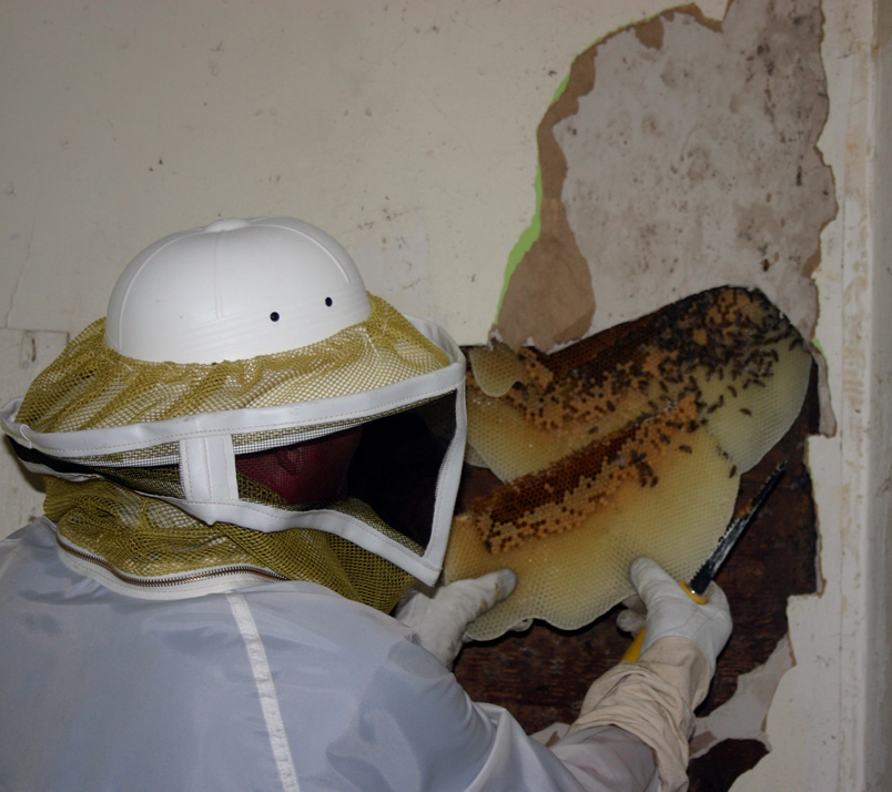 2-Interior Wall with Bee Hive