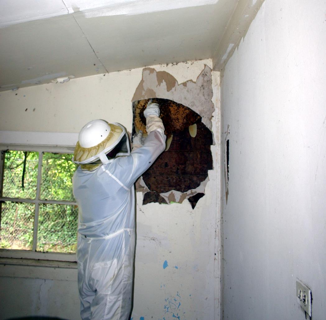 4-Honey Bee Rescue