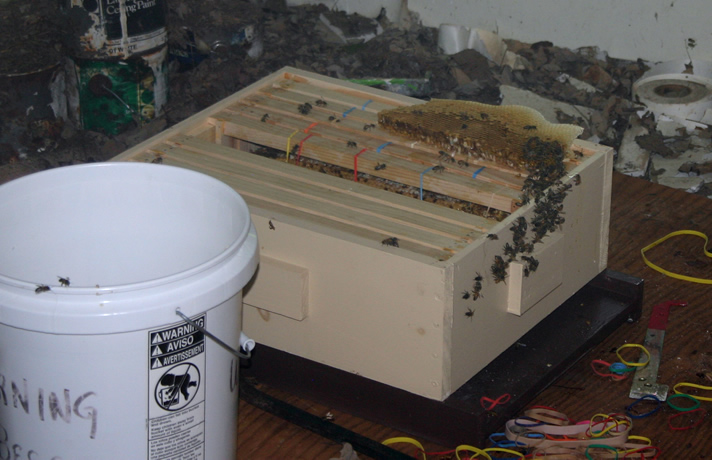 7-Honey Bee Hive for transport