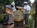 10-Rescued Honey Bee's new hive and home