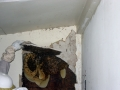 3-Exposed Bee Hive in Wall