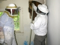 5-Honey Bee Rescue from wall